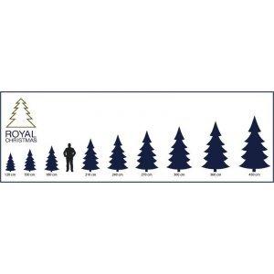 ЕЛКА ROYAL CHRISTMAS PHOENIX PP/PVC (210 SM)