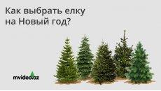 Как выбрать ёлку на Новый год и Рождество