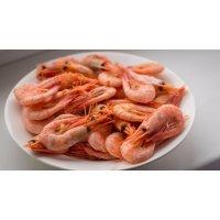 kupit-Креветки свежие морские мелкие 1 кг-v-baku-v-azerbaycane